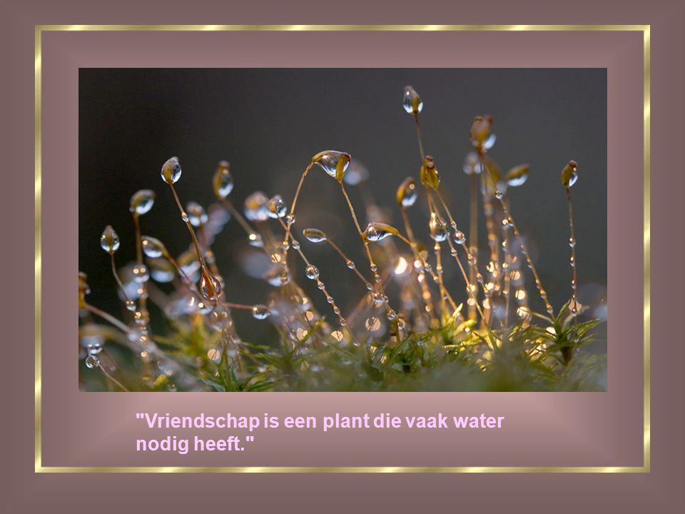 Vriendschap is een plant die vaak water nodig heeft.