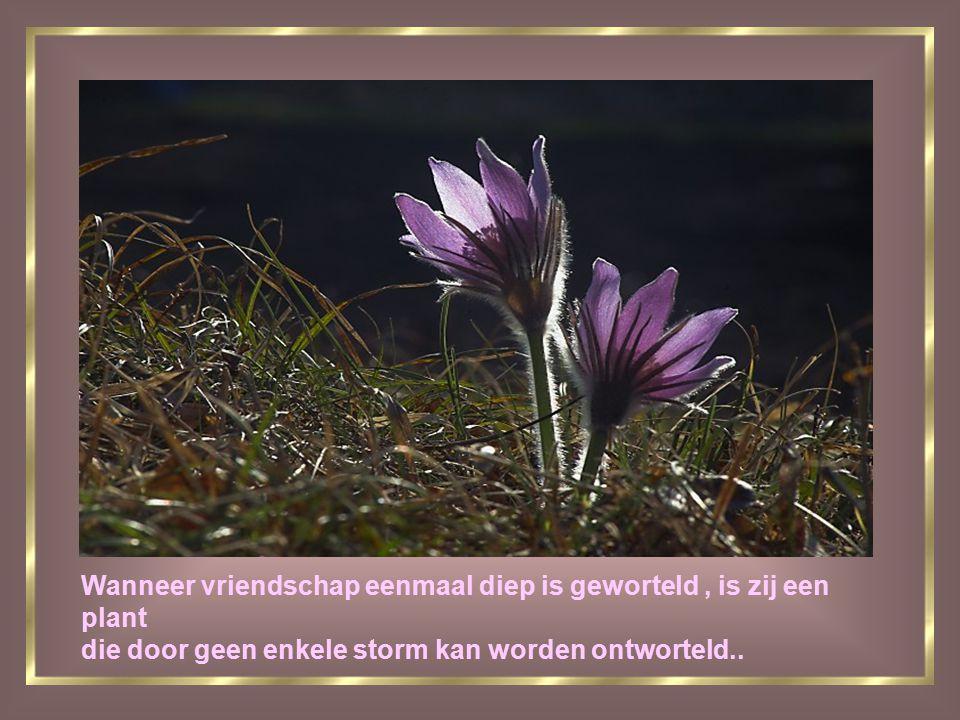 Wanneer vriendschap eenmaal diep is geworteld, is zij een plant die door geen enkele storm kan worden ontworteld..