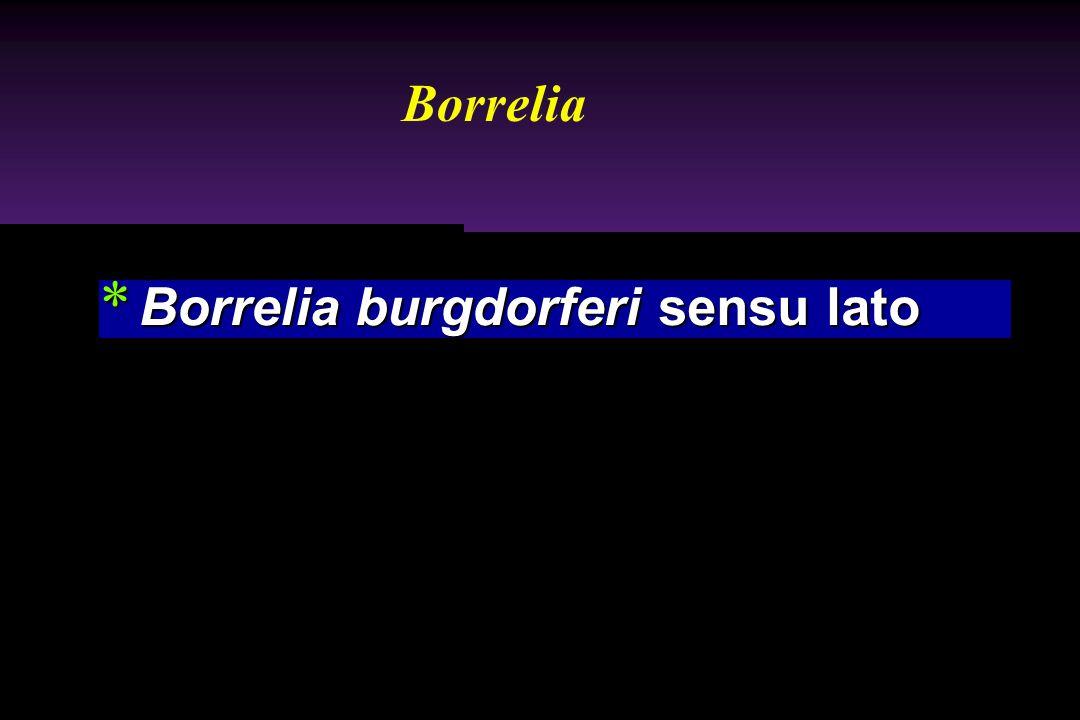 * Borrelia burgdorferi sensu lato Borrelia