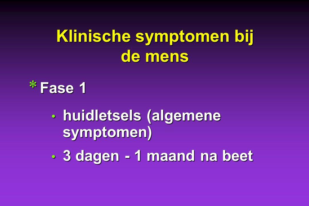 Klinische symptomen bij de mens * Fase 1 huidletsels (algemene symptomen) huidletsels (algemene symptomen) 3 dagen - 1 maand na beet 3 dagen - 1 maand na beet