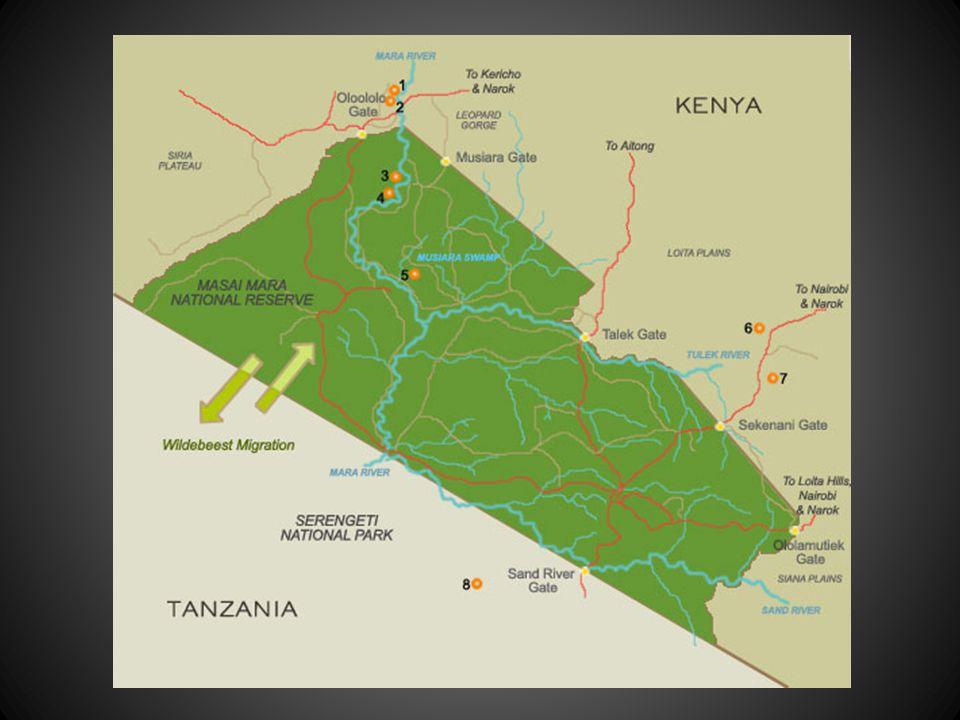 """Fotograaf Michel Denis-Huot, maakte in oktober, vorig jaar, deze geweldige foto's op safari in Kenia,"""" de Masai Mara"""" hij was verbaasd door wat hij za"""