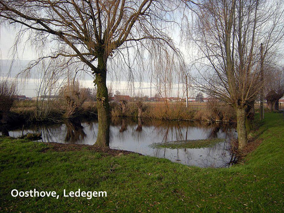 Oosthove, Ledegem