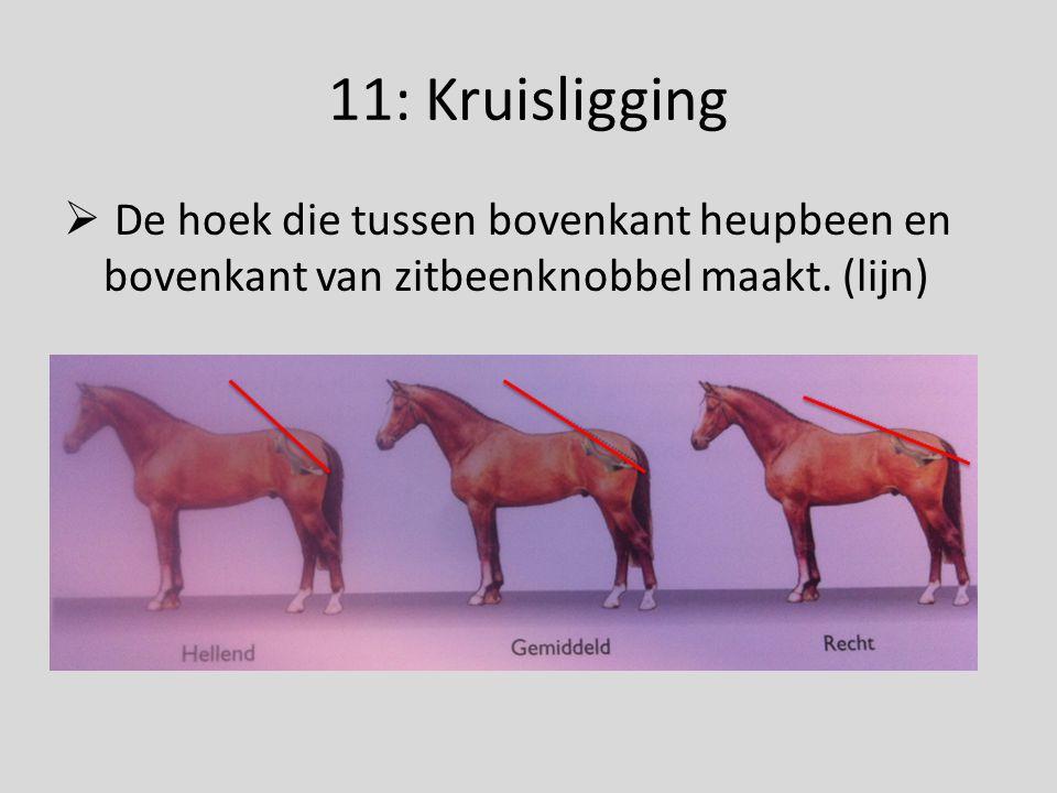 11: Kruisligging  De hoek die tussen bovenkant heupbeen en bovenkant van zitbeenknobbel maakt. (lijn)