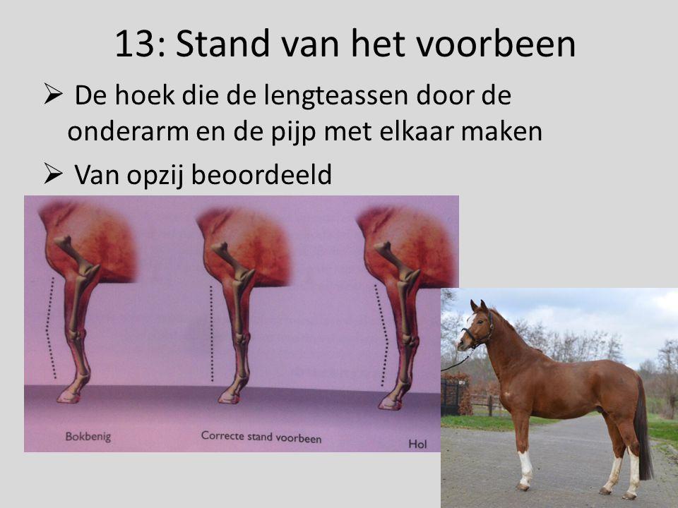13: Stand van het voorbeen  De hoek die de lengteassen door de onderarm en de pijp met elkaar maken  Van opzij beoordeeld