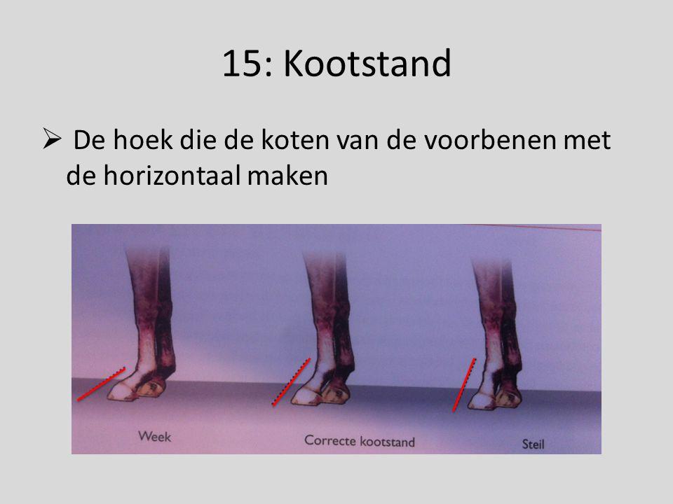 15: Kootstand  De hoek die de koten van de voorbenen met de horizontaal maken
