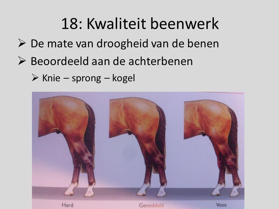 18: Kwaliteit beenwerk  De mate van droogheid van de benen  Beoordeeld aan de achterbenen  Knie – sprong – kogel