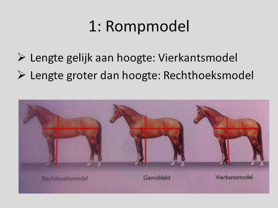 1: Rompmodel  Kortbenige paarden zijn snel 'langgelijnd'  Niet functioneel – minder optimale verhoudingen  Lengte voorbeen niet kleiner dan rompdiepte