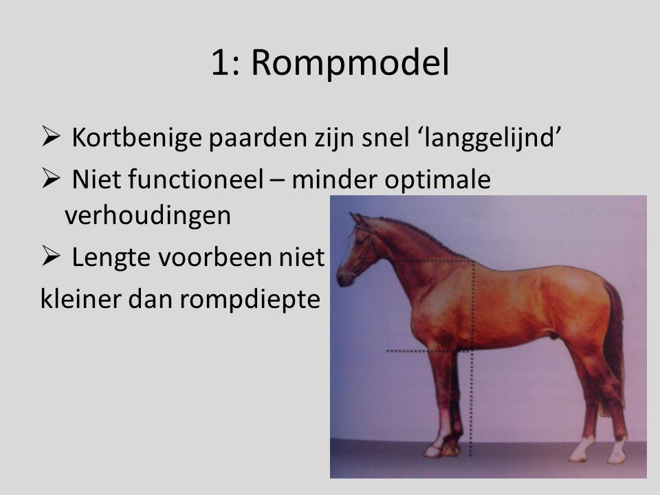 1: Rompmodel  Kortbenige paarden zijn snel 'langgelijnd'  Niet functioneel – minder optimale verhoudingen  Lengte voorbeen niet kleiner dan rompdie