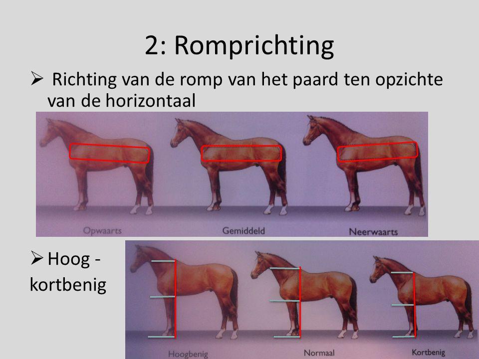 3: Hoofd-halsverbinding  2 belangrijke aspecten;  Lengte van de nek  Keeluitsnijding  Lichte hoofd-halsverbinding; lange nek, lichte keeluitsnijding, kleine afstand bovenkant nek – onderkant keel