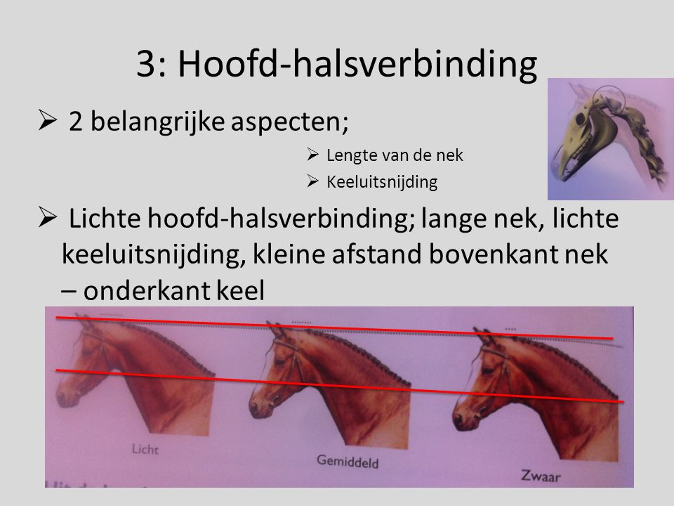 3: Hoofd-halsverbinding  2 belangrijke aspecten;  Lengte van de nek  Keeluitsnijding  Lichte hoofd-halsverbinding; lange nek, lichte keeluitsnijdi