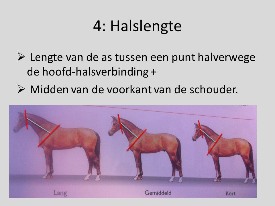12: Kruislengte  De lengte, gemeten vanaf de voorkant van het heupbeen tot aan de achterkant van de zitbeenknobbel