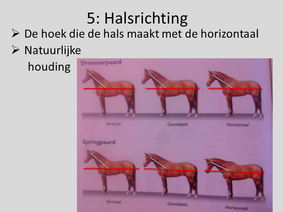 5: Halsrichting  De hoek die de hals maakt met de horizontaal  Natuurlijke houding