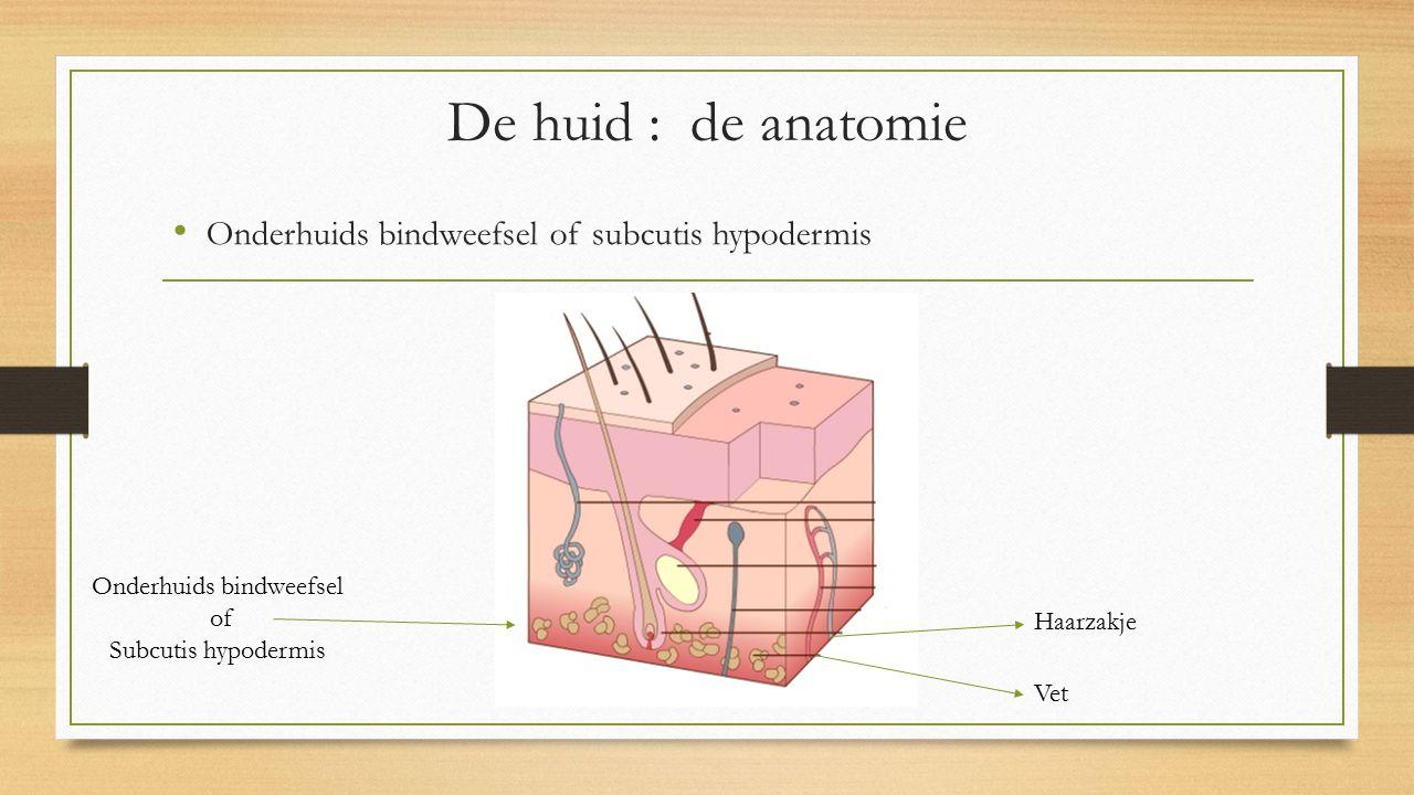 De huid : de anatomie Onderhuids bindweefsel of subcutis hypodermis Onderhuids bindweefsel of Subcutis hypodermis Haarzakje Vet