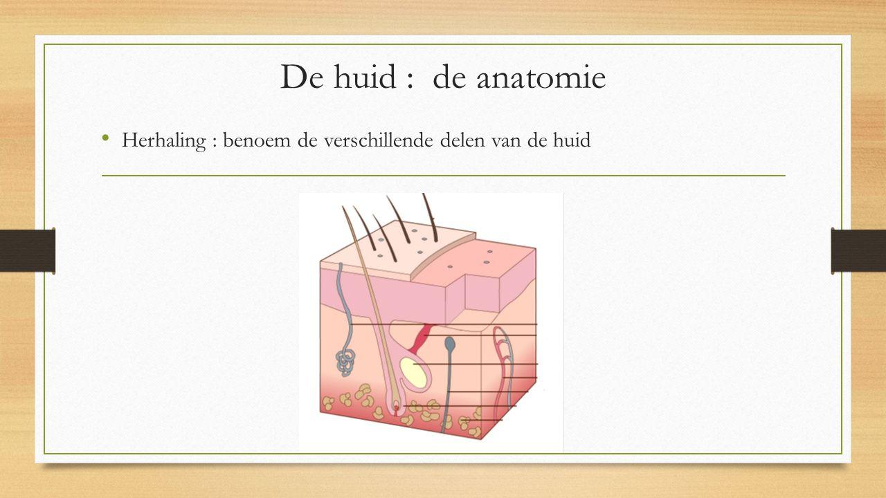 Herhaling : benoem de verschillende delen van de huid De huid : de anatomie