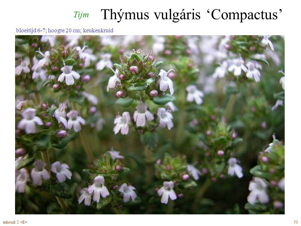 Thýmus vulgáris 'Compactus' inhoud: 2 50 bloeitijd 6-7; hoogte 20 cm; keukenkruid Tijm