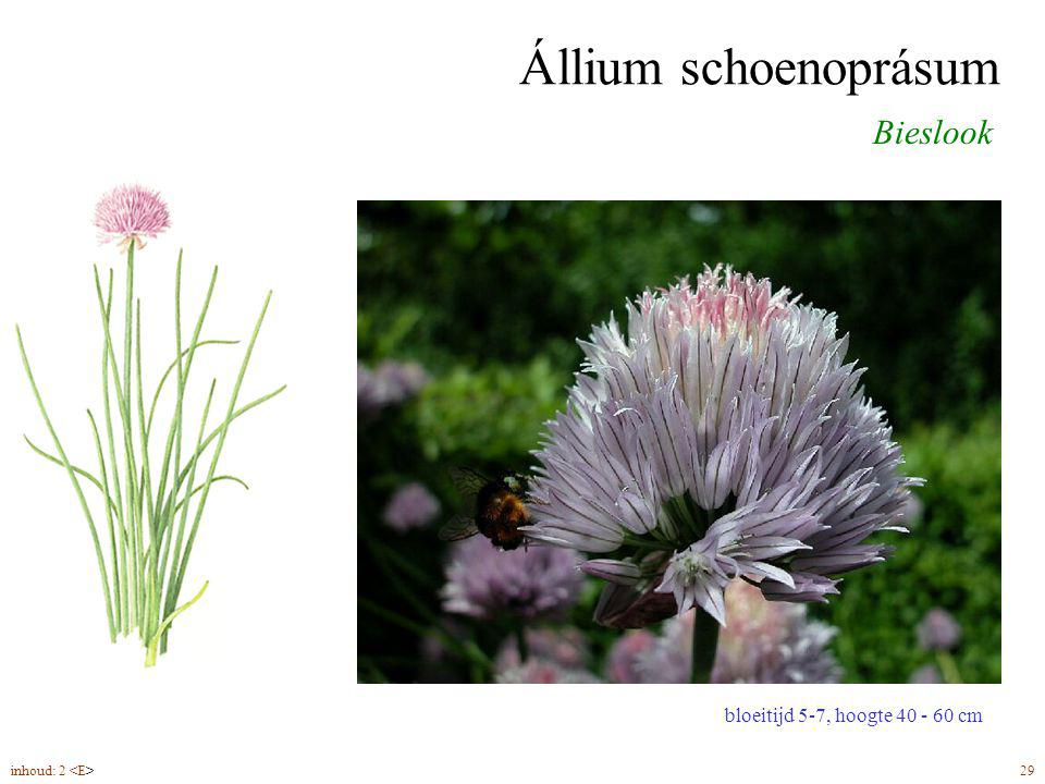 Állium schoenoprásum Bieslook bloeitijd 5-7, hoogte 40 - 60 cm inhoud: 2 29