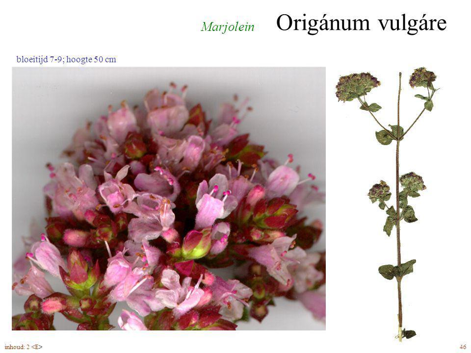 Origánum vulgáre inhoud: 2 46 Marjolein bloeitijd 7-9; hoogte 50 cm