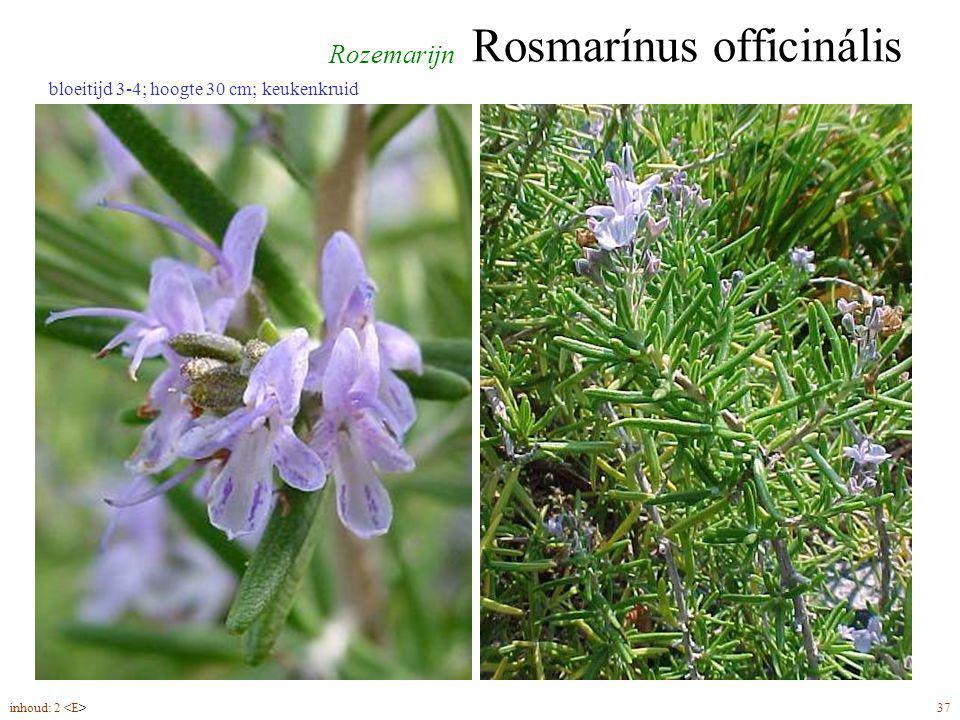 Rosmarínus officinális inhoud: 2 37 bloeitijd 3-4; hoogte 30 cm; keukenkruid Rozemarijn