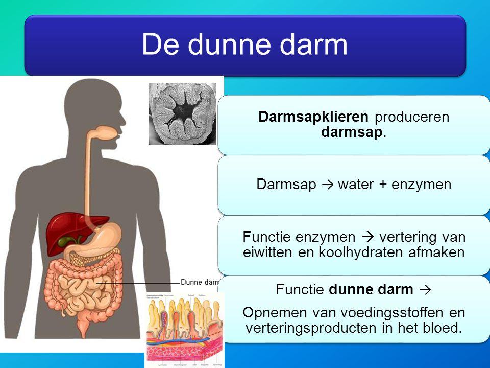 Functie dunne darm