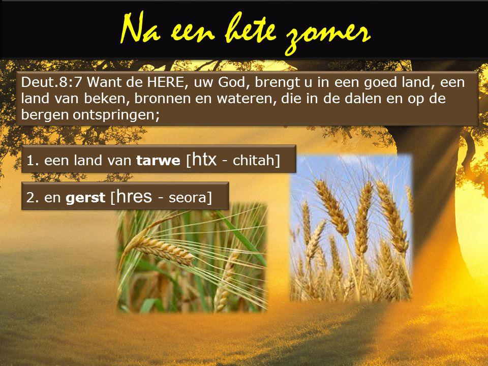 Na een hete zomer Mattheüs 24: Leert dan van de vijgeboom deze les: Wanneer zijn hout reeds week wordt en de bladeren doet uitspruiten, weet gij daaraan, dat de zomer nabij is.