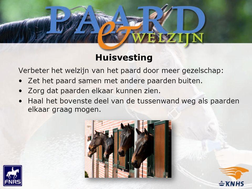 Huisvesting Verbeter het welzijn van het paard door meer gezelschap: Zet het paard samen met andere paarden buiten. Zorg dat paarden elkaar kunnen zie