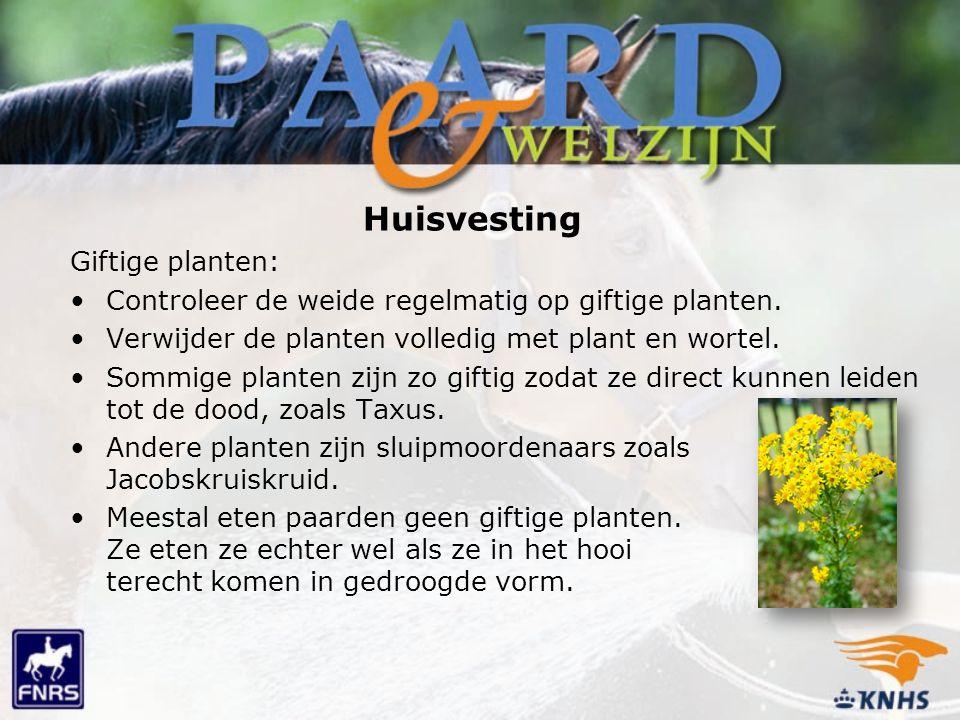 Huisvesting Giftige planten: Controleer de weide regelmatig op giftige planten. Verwijder de planten volledig met plant en wortel. Sommige planten zij