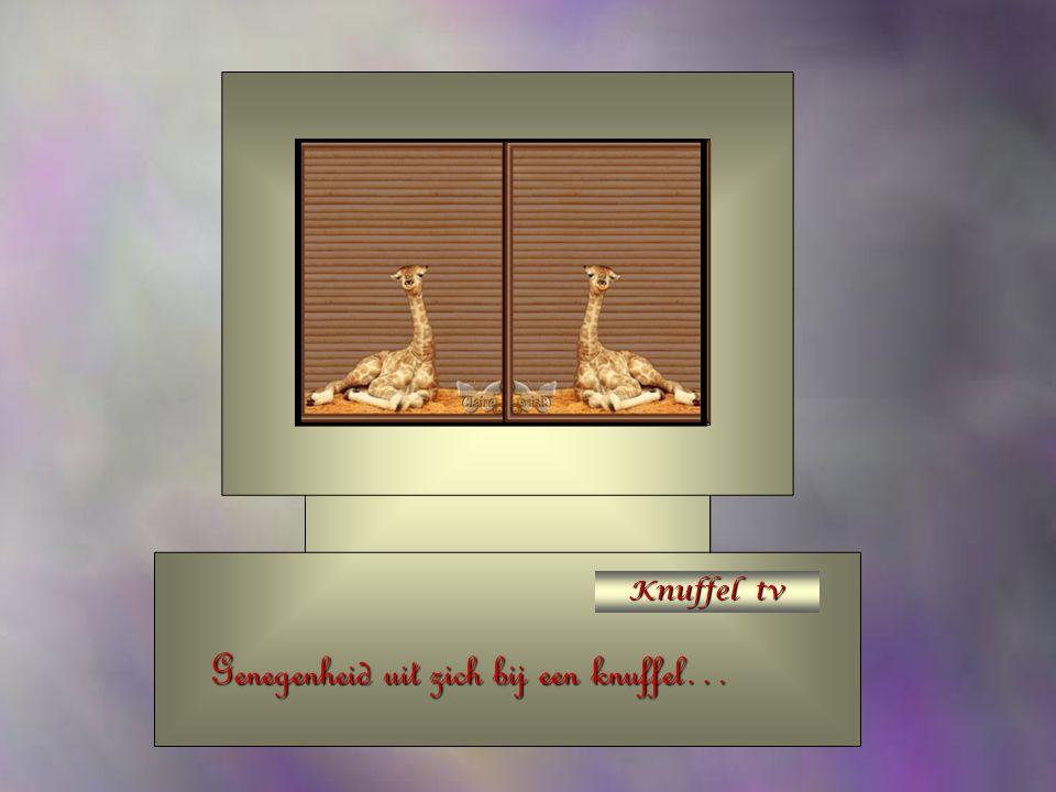 Knuffel tv Weet jij soms nog iemand die blij zou zijn met een knuffel…?