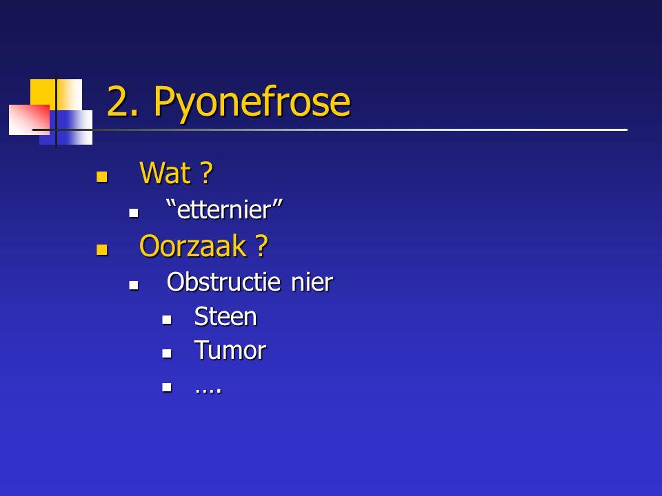"""2. Pyonefrose Wat ? Wat ? """"etternier"""" """"etternier"""" Oorzaak ? Oorzaak ? Obstructie nier Obstructie nier Steen Steen Tumor Tumor …. …."""