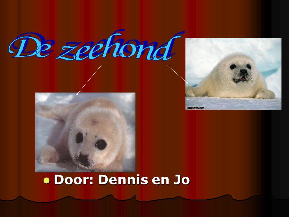 Door: Dennis en Jo Door: Dennis en Jo