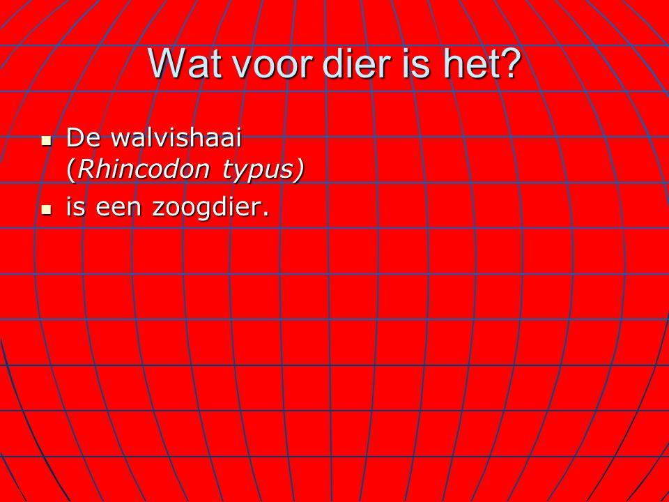 Wat voor dier is het? De walvishaai (Rhincodon typus) De walvishaai (Rhincodon typus) is een zoogdier. is een zoogdier.