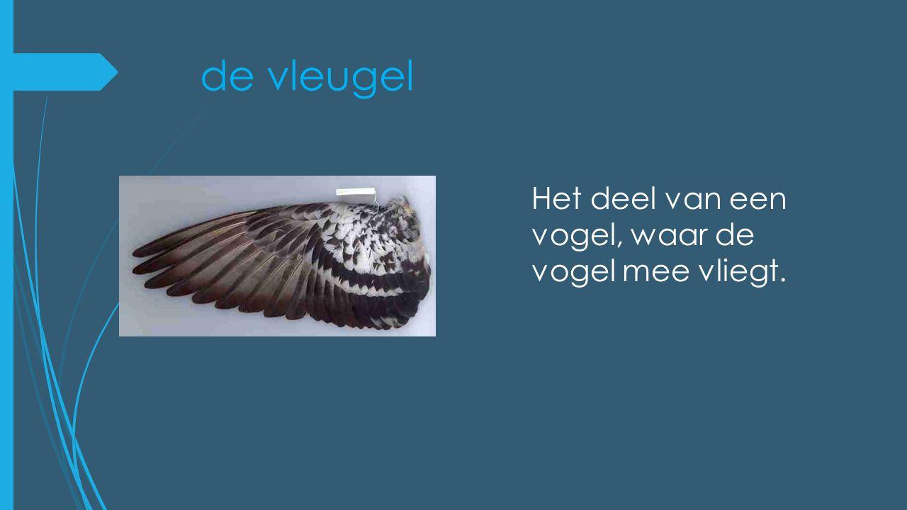 de vleugel Het deel van een vogel, waar de vogel mee vliegt.