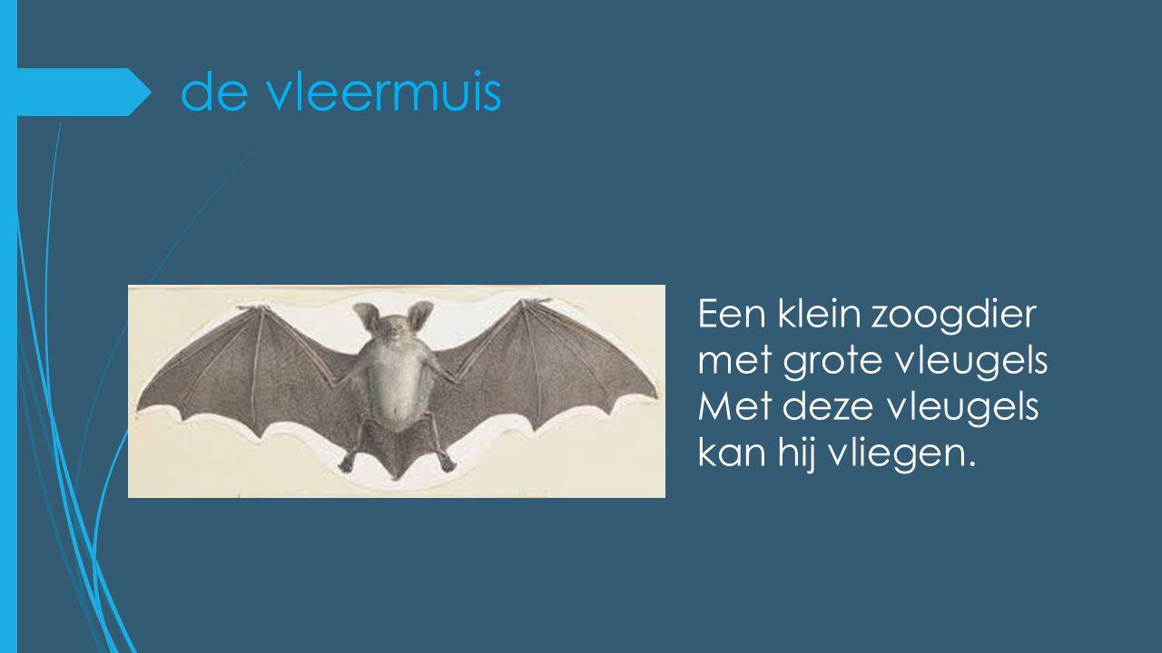 de vleermuis Een klein zoogdier met grote vleugels Met deze vleugels kan hij vliegen.