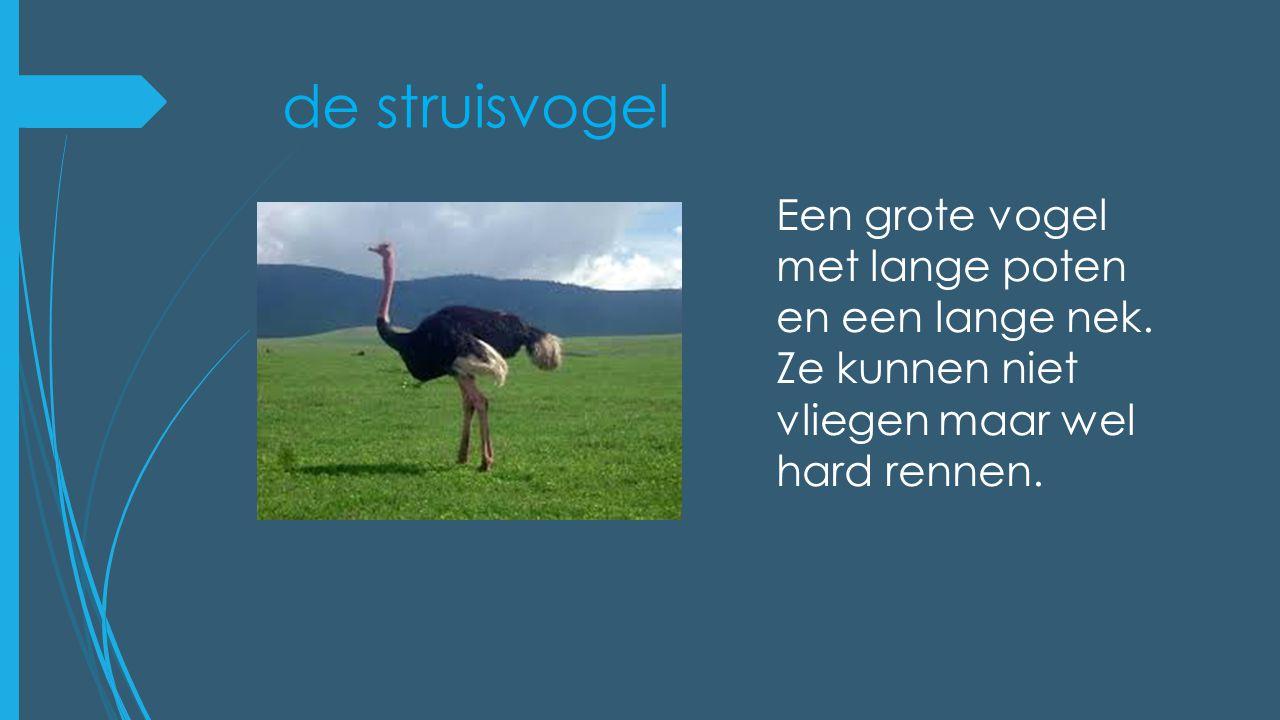 de struisvogel Een grote vogel met lange poten en een lange nek. Ze kunnen niet vliegen maar wel hard rennen.