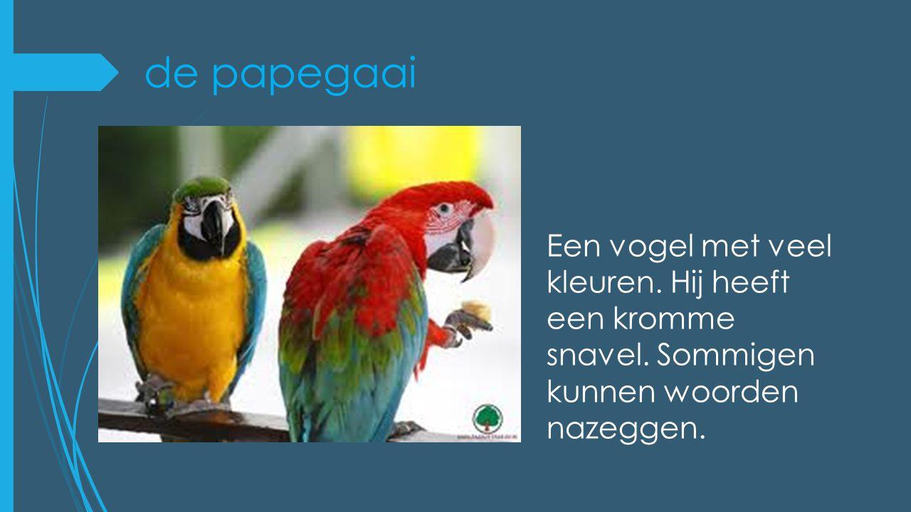 de papegaai Een vogel met veel kleuren. Hij heeft een kromme snavel. Sommigen kunnen woorden nazeggen.