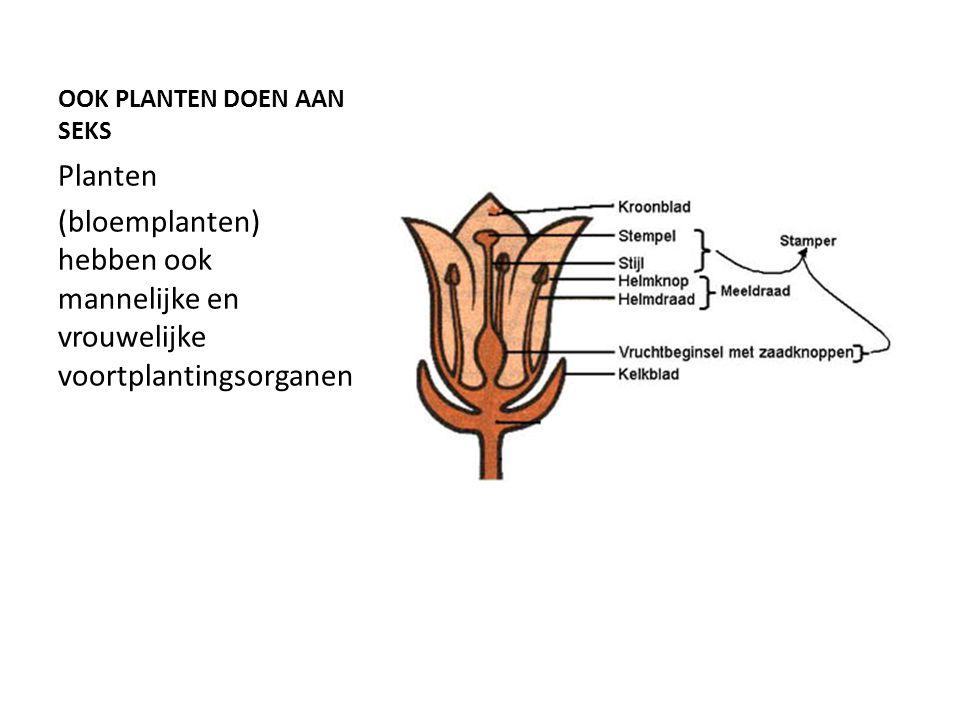 OOK PLANTEN DOEN AAN SEKS Planten (bloemplanten) hebben ook mannelijke en vrouwelijke voortplantingsorganen