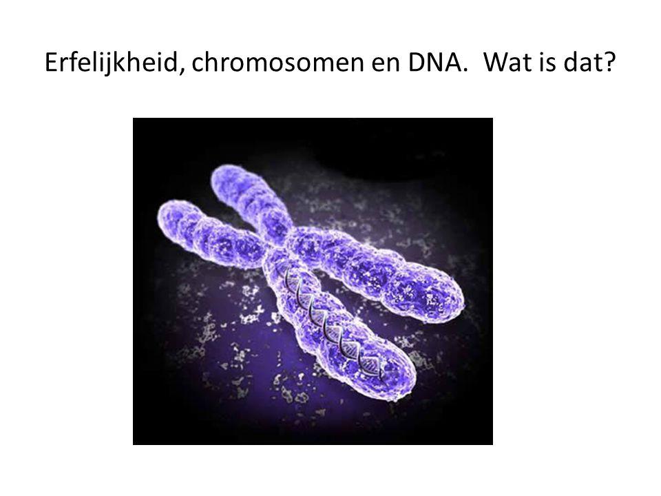 Erfelijkheid, chromosomen en DNA. Wat is dat?