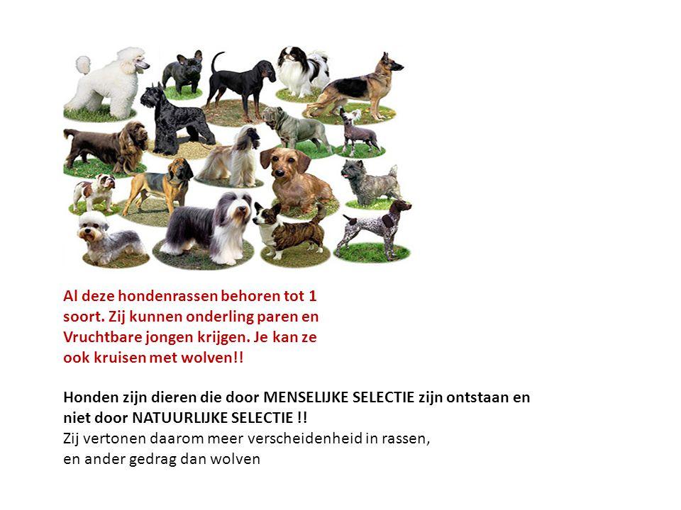 Al deze hondenrassen behoren tot 1 soort.Zij kunnen onderling paren en Vruchtbare jongen krijgen.