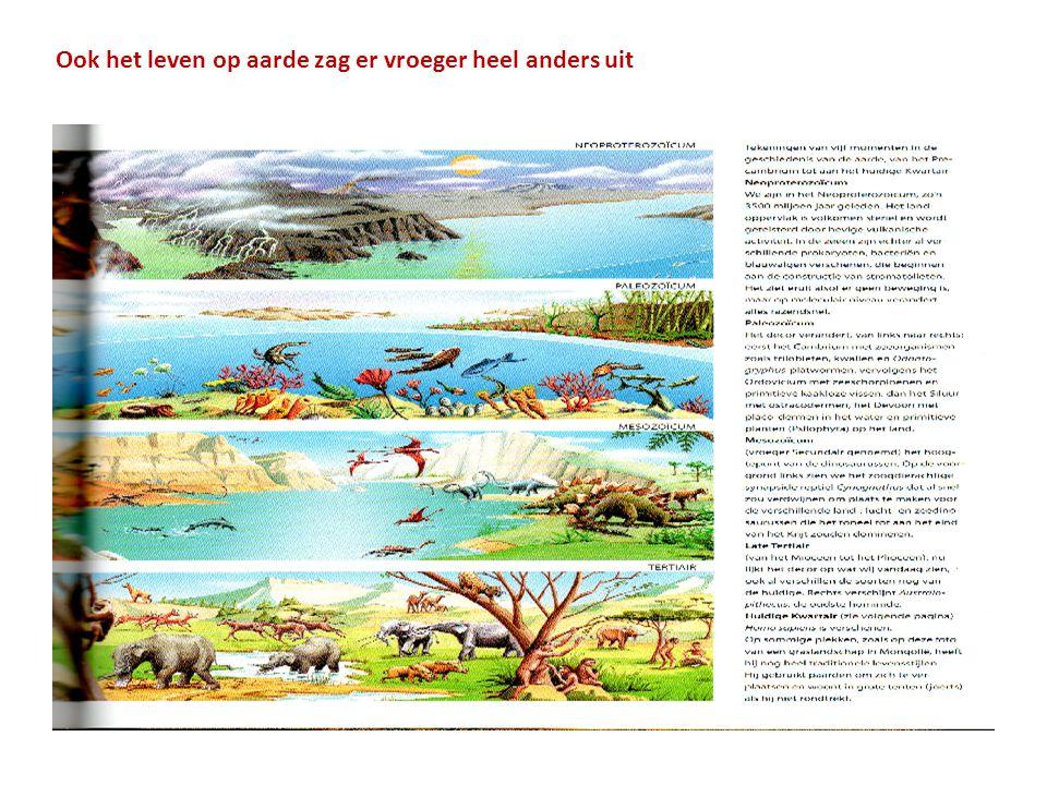 De kruising tussen 2 verwante soorten heten Hybriden De meeste jongen van hybriden zijn onvruchtbaar, maar sommige niet Zebra+paard (foto 1) Leeuw + tijger(foto 2) Dromedaris + lama (foto 3)