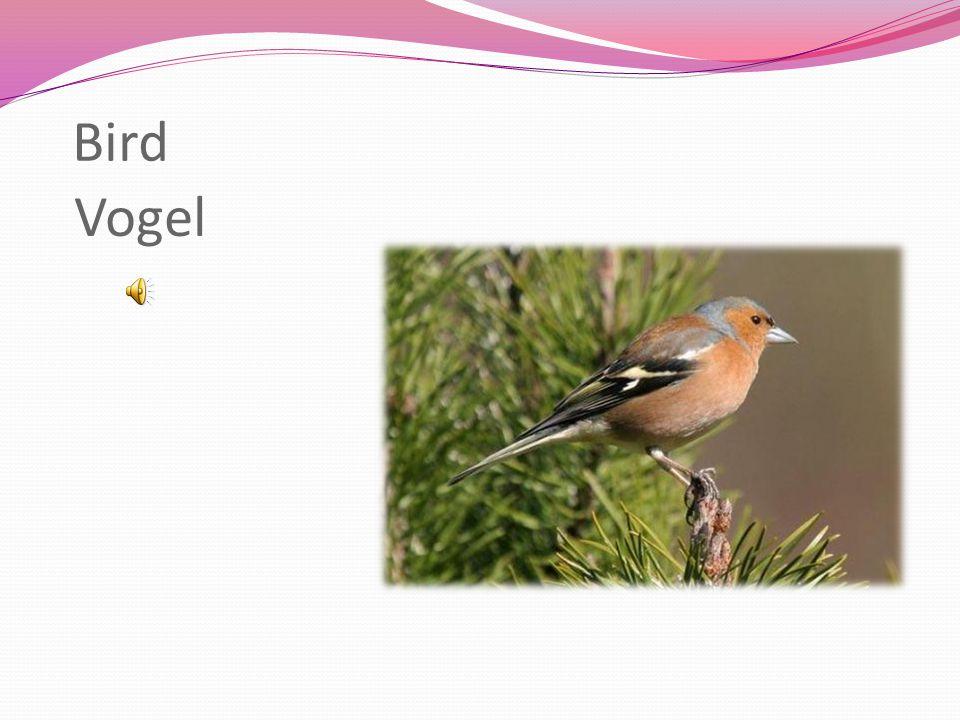 Bird Vogel