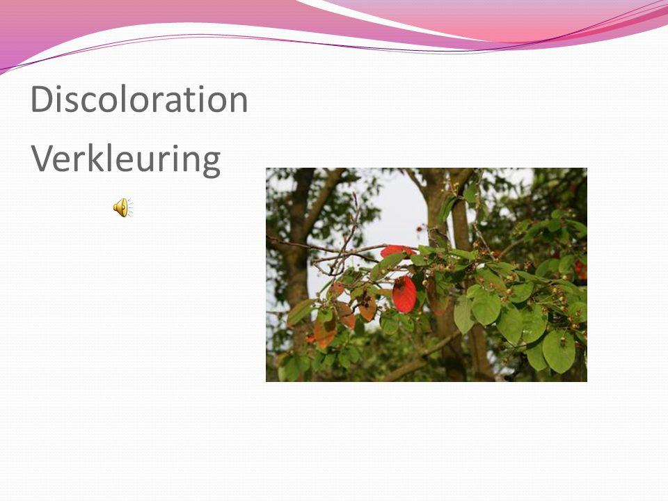 rowanberry lijsterbes