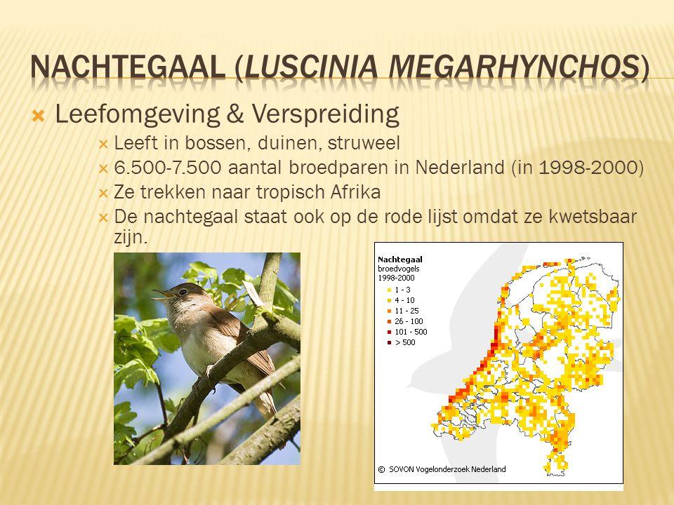  Leefomgeving & Verspreiding  Leeft in bossen, duinen, struweel  6.500-7.500 aantal broedparen in Nederland (in 1998-2000)  Ze trekken naar tropis