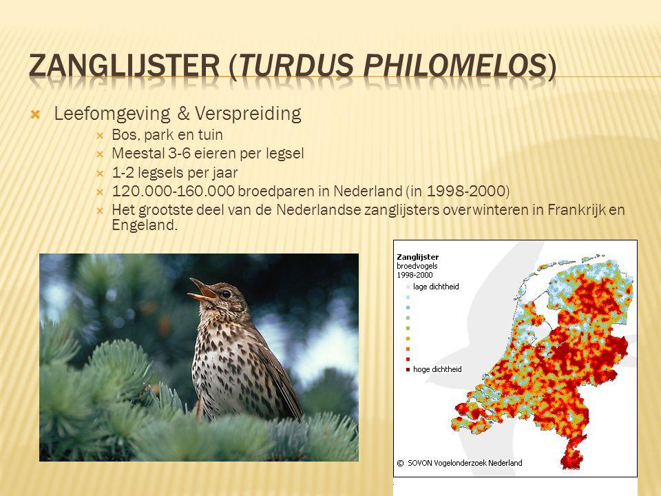  Leefomgeving & Verspreiding  Bos, park en tuin  Meestal 3-6 eieren per legsel  1-2 legsels per jaar  120.000-160.000 broedparen in Nederland (in