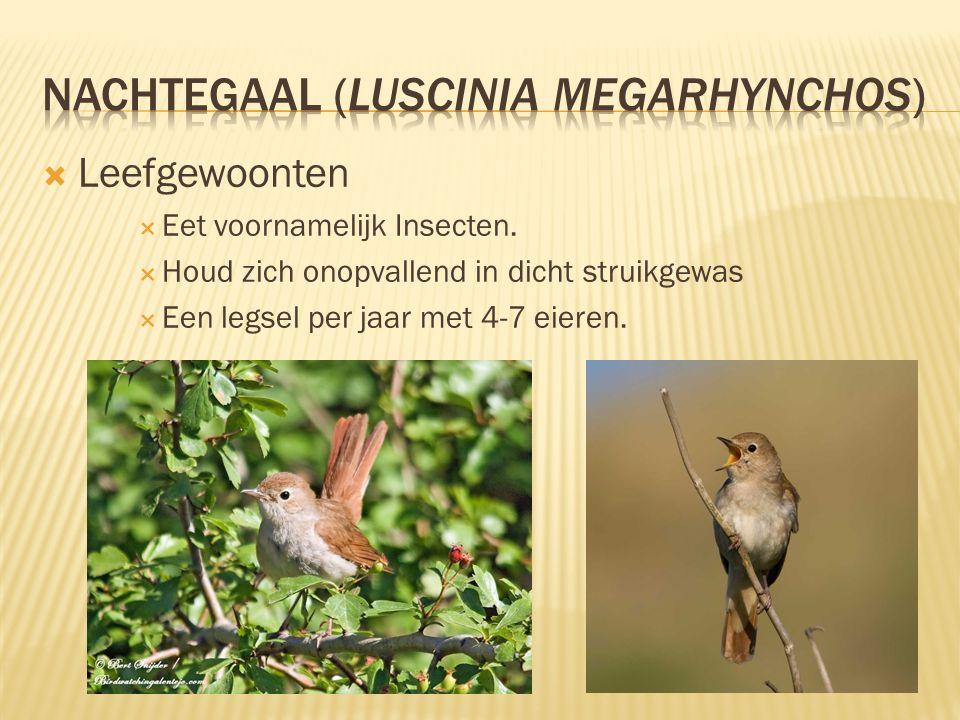  Leefgewoonten  Eet voornamelijk Insecten.  Houd zich onopvallend in dicht struikgewas  Een legsel per jaar met 4-7 eieren.