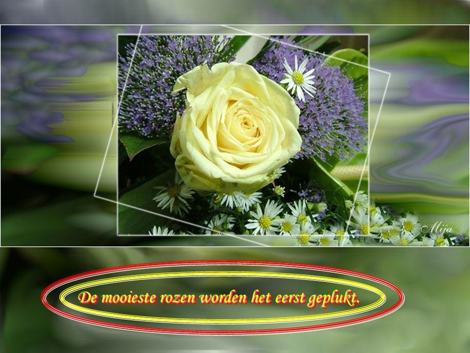 Vriendschap is een bloem die de koudste dagen trotseert Vriendschap is een bloem die de koudste dagen trotseert
