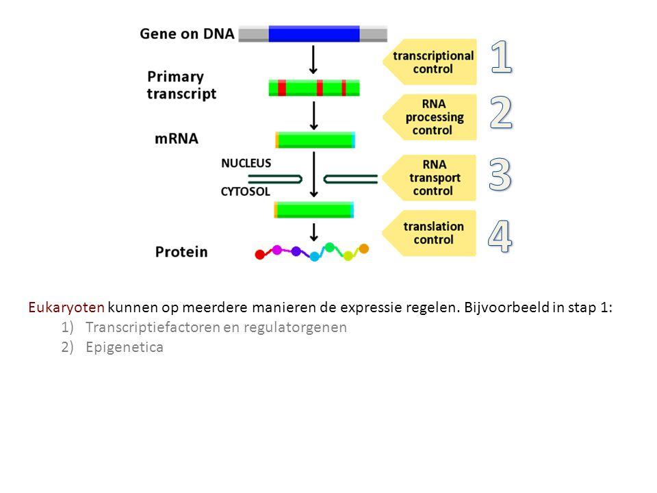 Eukaryoten kunnen op meerdere manieren de expressie regelen. Bijvoorbeeld in stap 1: 1)Transcriptiefactoren en regulatorgenen 2)Epigenetica
