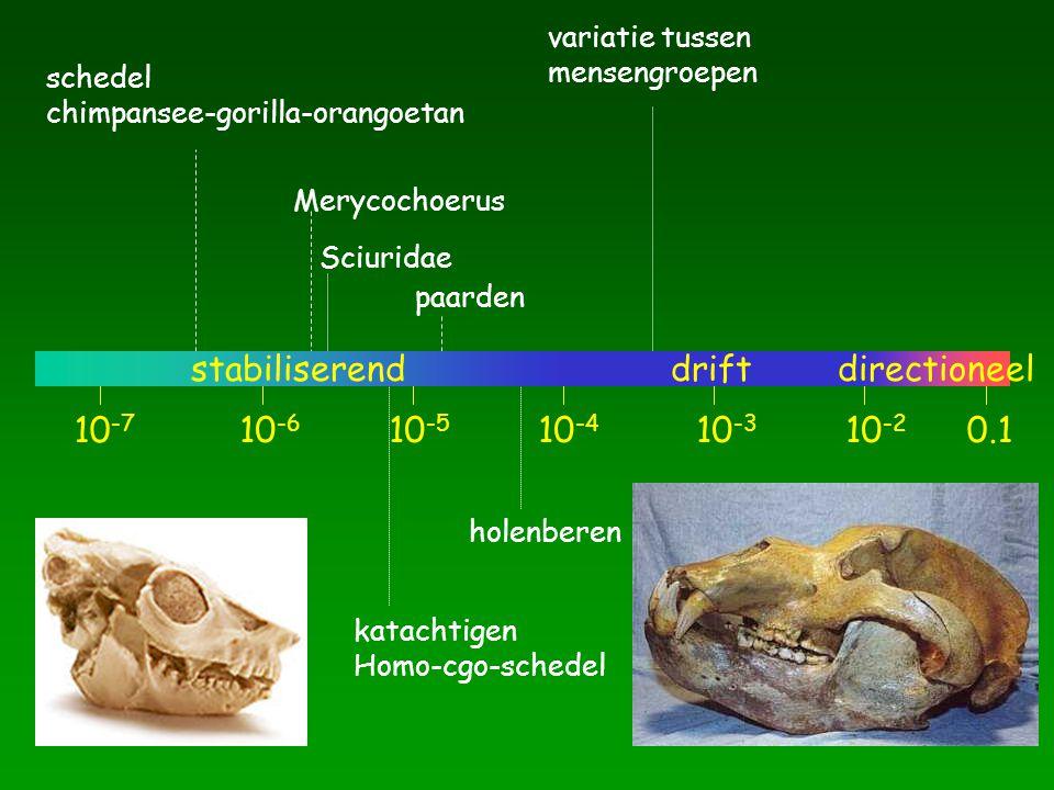 10 -7 10 -6 10 -5 10 -4 10 -3 10 -2 schedel chimpansee-gorilla-orangoetan Merycochoerus Sciuridae paarden katachtigen Homo-cgo-schedel holenberen variatie tussen mensengroepen 0.1 stabiliserenddriftdirectioneel