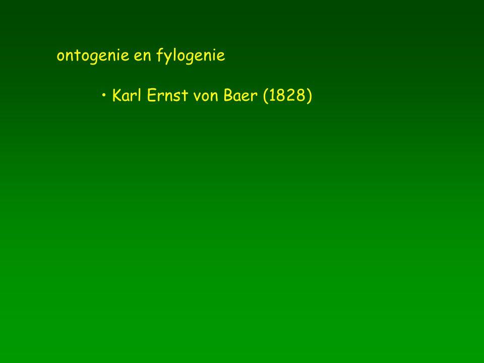 ontogenie en fylogenie Karl Ernst von Baer (1828)