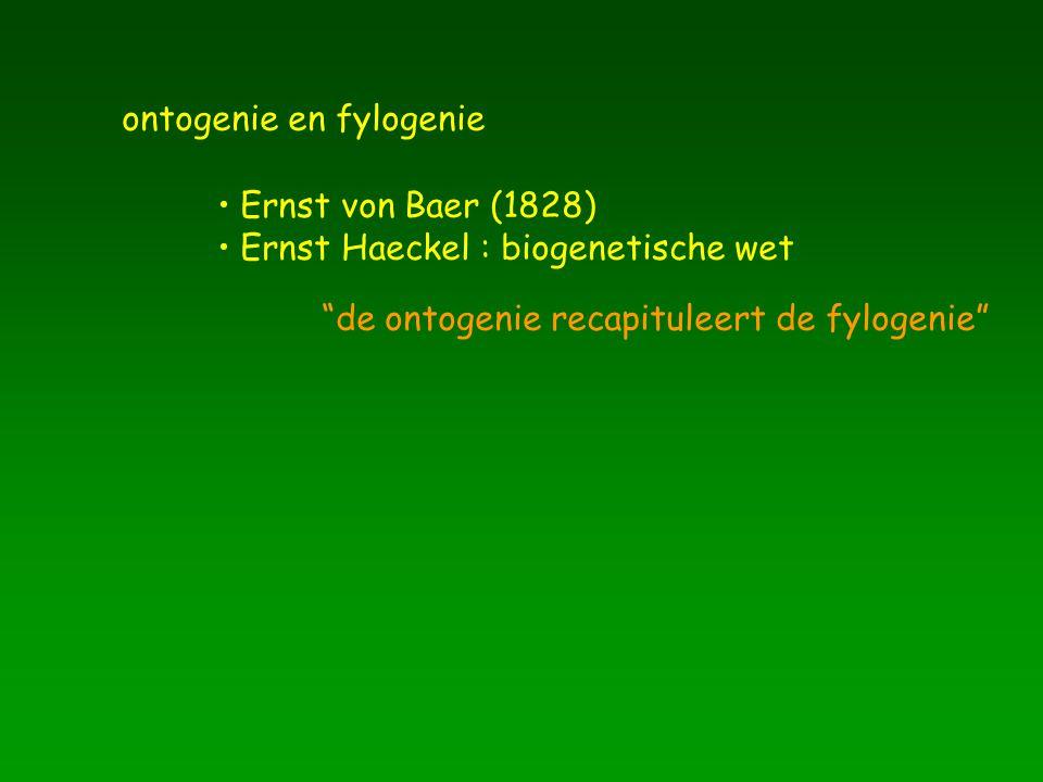 ontogenie en fylogenie Ernst von Baer (1828) Ernst Haeckel : biogenetische wet de ontogenie recapituleert de fylogenie