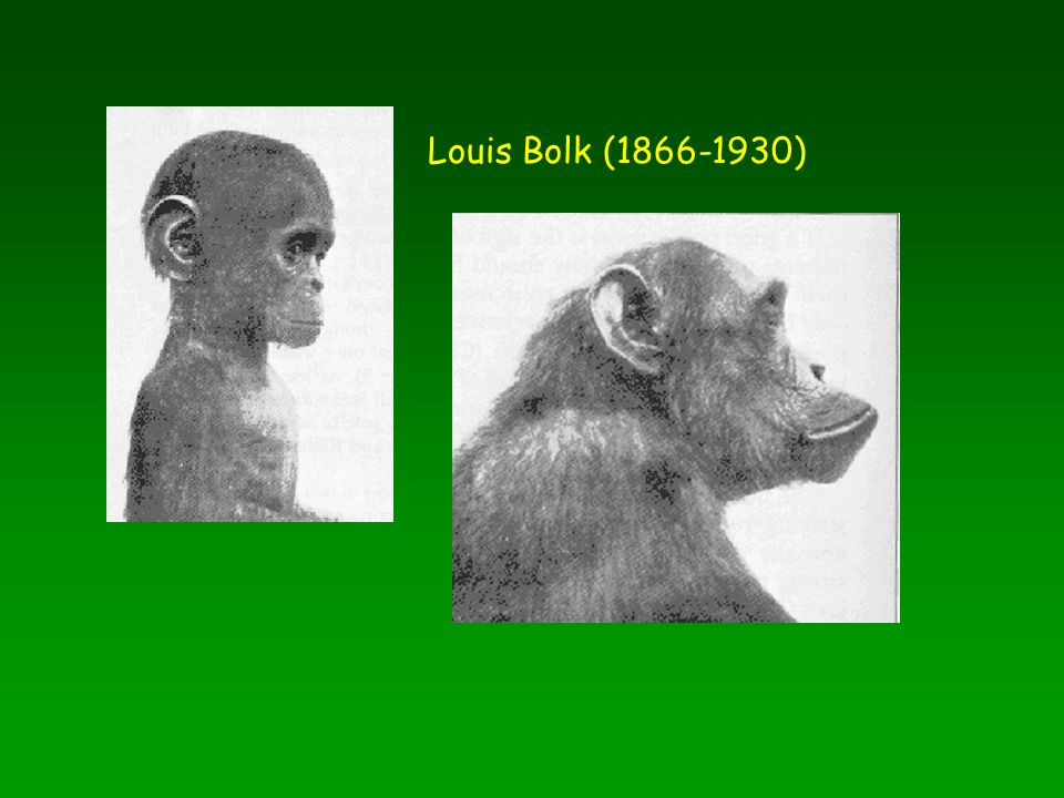Louis Bolk (1866-1930)