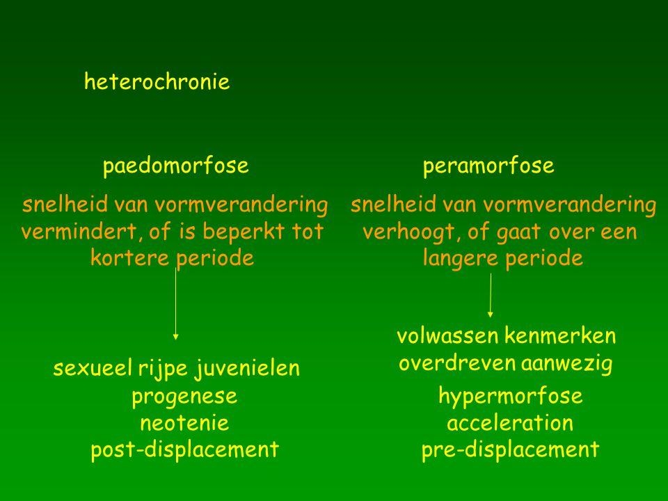 heterochronie paedomorfoseperamorfose snelheid van vormverandering vermindert, of is beperkt tot kortere periode snelheid van vormverandering verhoogt, of gaat over een langere periode sexueel rijpe juvenielen volwassen kenmerken overdreven aanwezig progenese neotenie post-displacement hypermorfose acceleration pre-displacement
